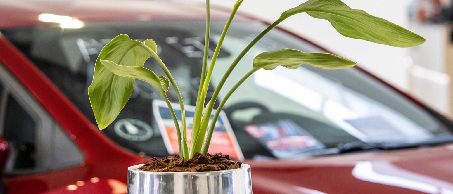 Er din bil forårsklar?